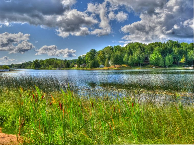 Lake with trees and summer sky